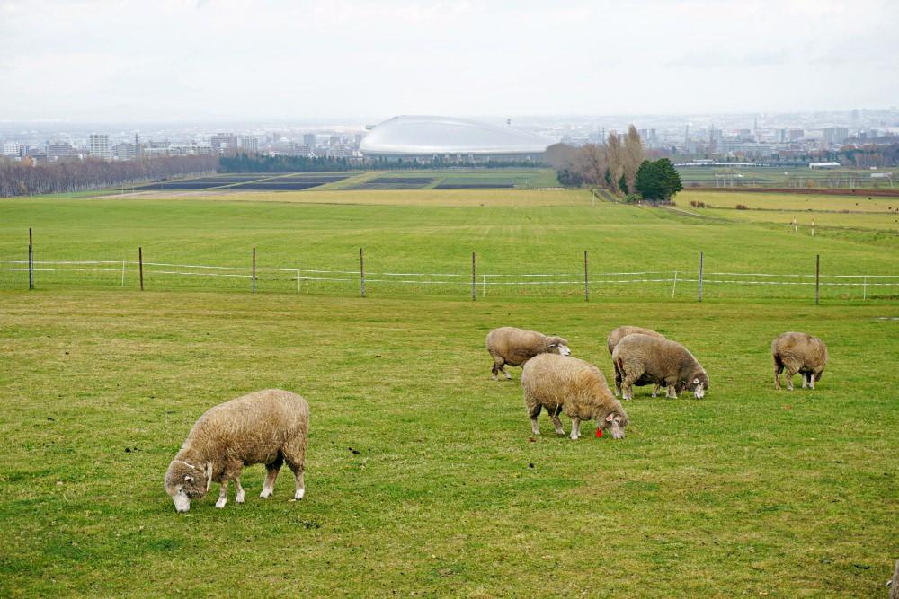 【札幌景點】羊之丘展望台 夏賞薰衣草冬玩雪 不同風貌 還有成吉思汗烤肉!