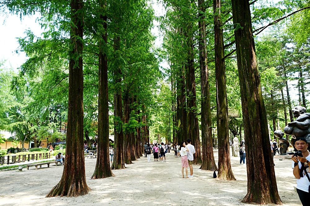 【首爾旅遊】 Day 3. 南怡島 晨靜樹木林 入住位置太好西鐵飯店推薦