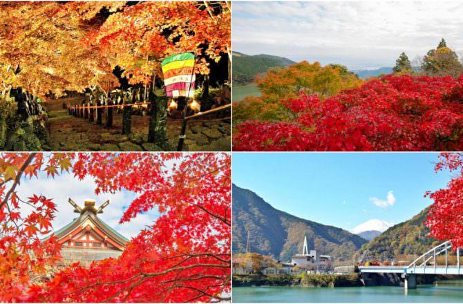 【神奈川旅遊】賞楓季節預備起!神奈川縣內楓葉資訊!