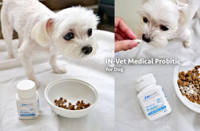 【寵物】 IN-Vet PA-5051 醫護益生菌 動物醫院專用配方 專為毛小孩設計的益生菌